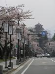 鶴ヶ城へ延びる桜並木_b.jpg
